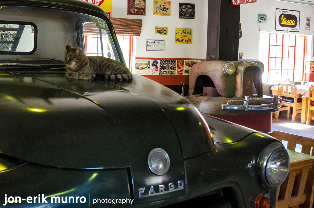 A cat sits on the bonnet of the car at Canyon Roadhouse