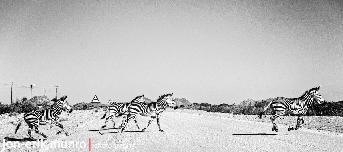 4 Zebra crossing the road