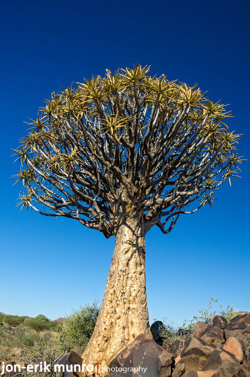 A Quiver Tree