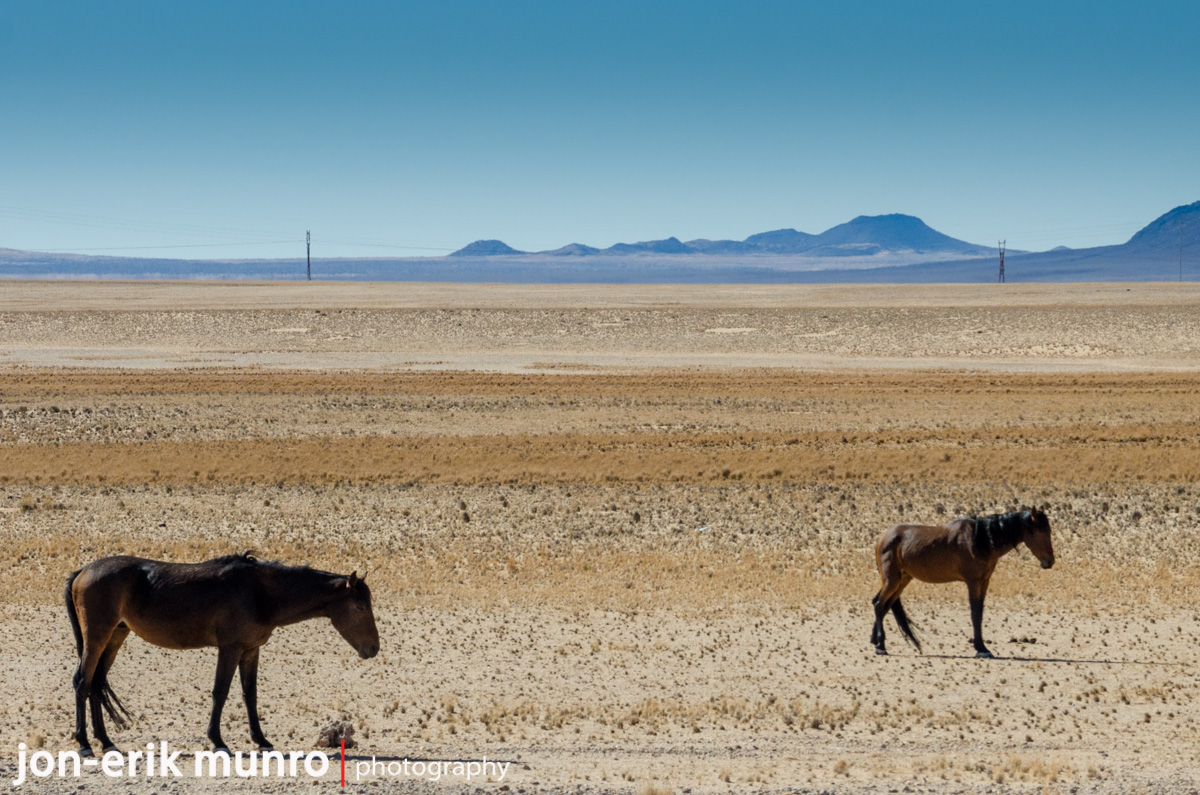 Wild horses near Aus