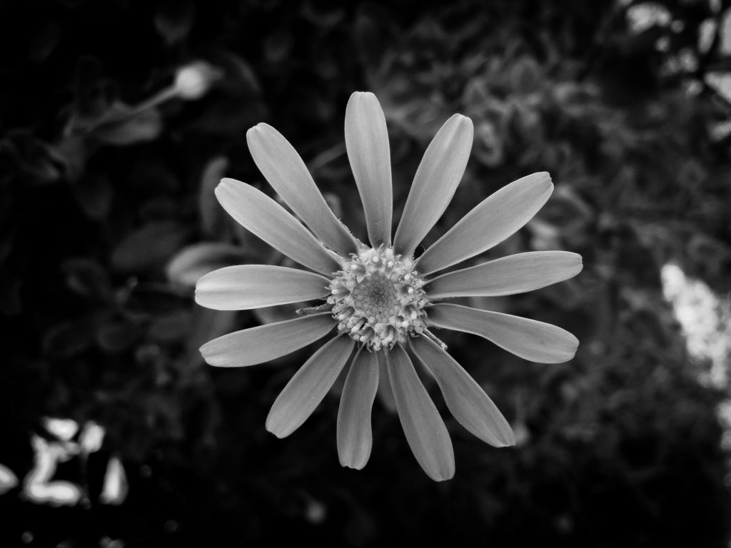 Photographed with the iPhone SE using Lightroom Mobile and converted to black and white
