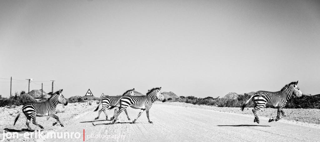 4 Zebra crossing the road